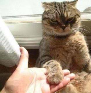 猫咪的霸气